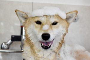 dog-being-washed